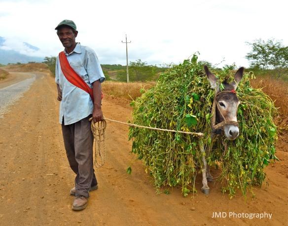 Man and His Donkey - Fogo, Cape Verde 2012